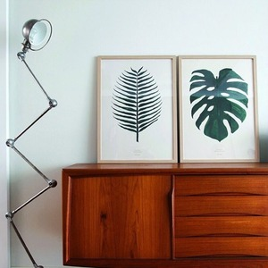 MONSTERA , COCOS SET (10%할인) CASA 8월호 제품